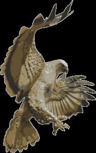 choochus-Hawk-Pouncing (1)